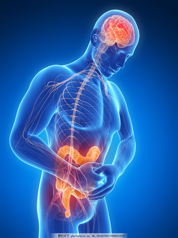 人体肠胃疼痛 人体肠胃疼痛图片素材 肠道 人体模型 人体结构 人体