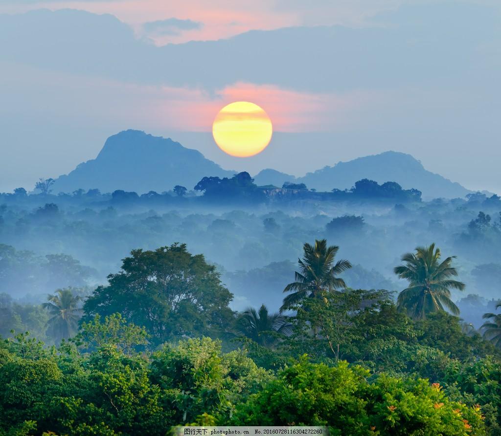 唯美日出风景 唯美日出风景图片素材下载 清晨 朦胧 日出植物 丛林
