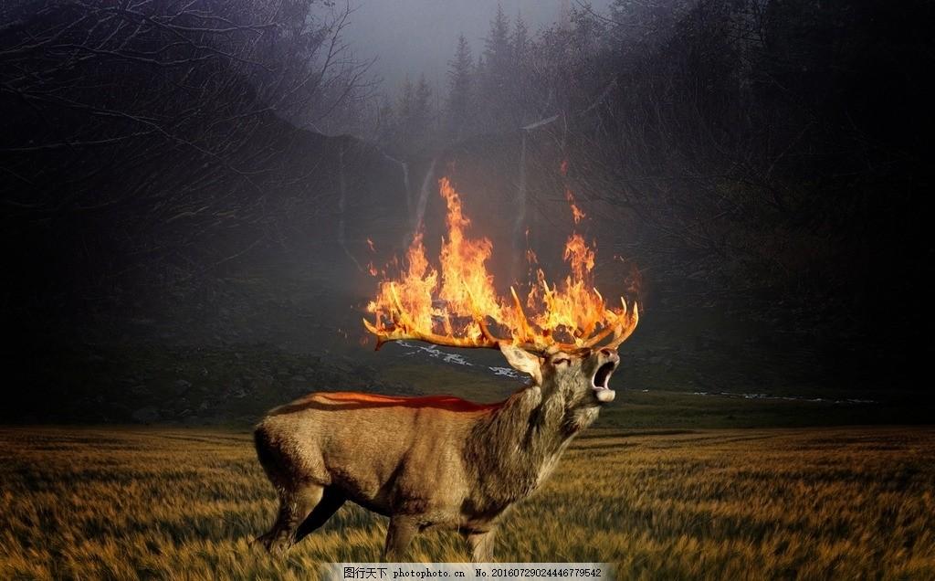 鹿动物摄影 驯鹿 公益 鹿角 火焰 草地 森林 大自然 雾霾