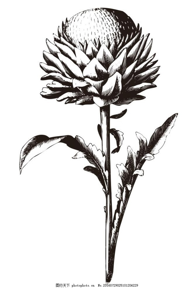 线条 线描 简画 黑白画 卡通 手绘 简单手绘画 矢量图 花草树木 设计