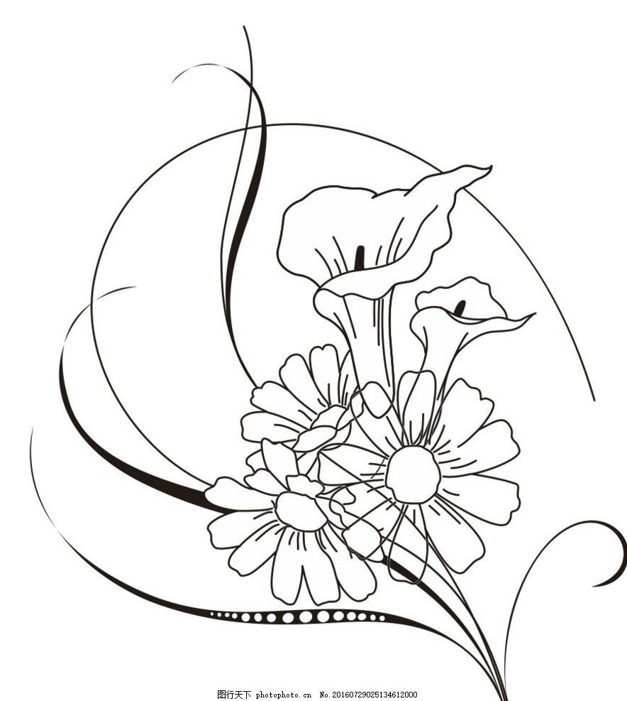 马蹄莲 菊花 马蹄莲花朵 线描画 素描 盆栽 植物 花卉 草木