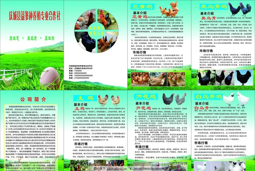 养殖册子 宣传 乌鸡 土鸡 芦花鸡 三黄鸡 画册 绿色 健康 草本