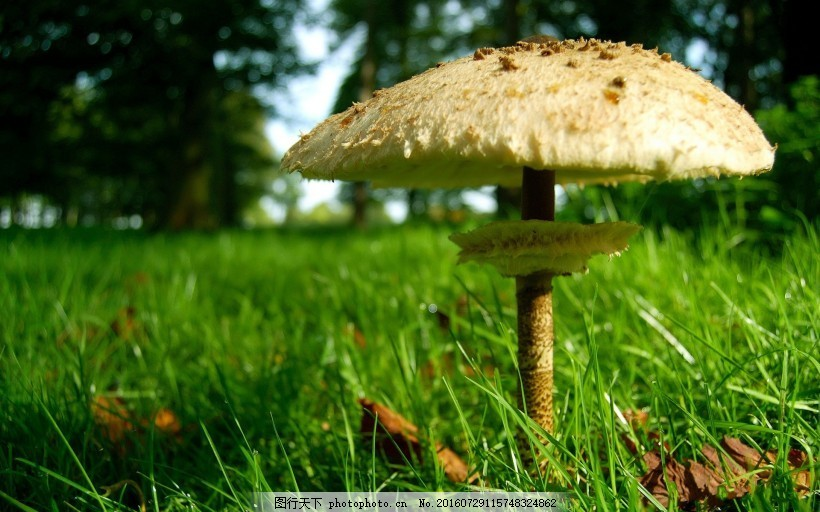 森林中的蘑菇