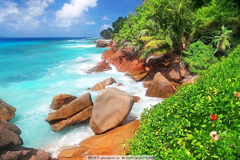 海边 石头 森林 椰子树 大海