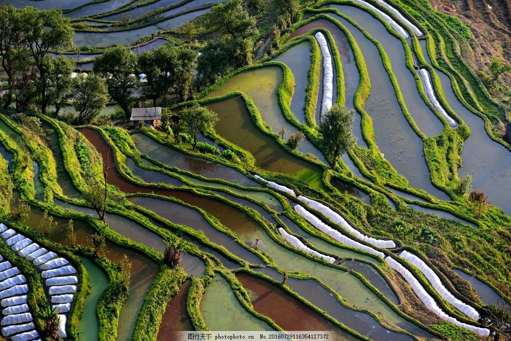 美丽的云南梯田风景图片