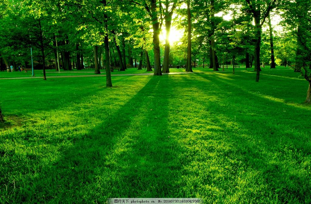 树林风景 树林风景高清图片下载 线 绿色 清晨 森林 树木