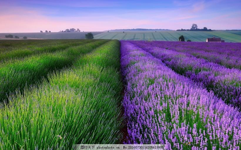 壁纸 成片种植 风景 花 植物 种植基地 桌面 820_512