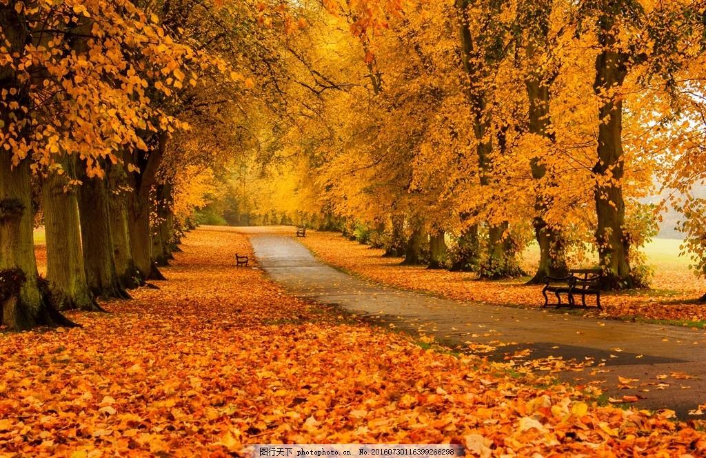 秋天风景 高清秋天风景图片下载 树叶 树木 树林 公路 落叶图片