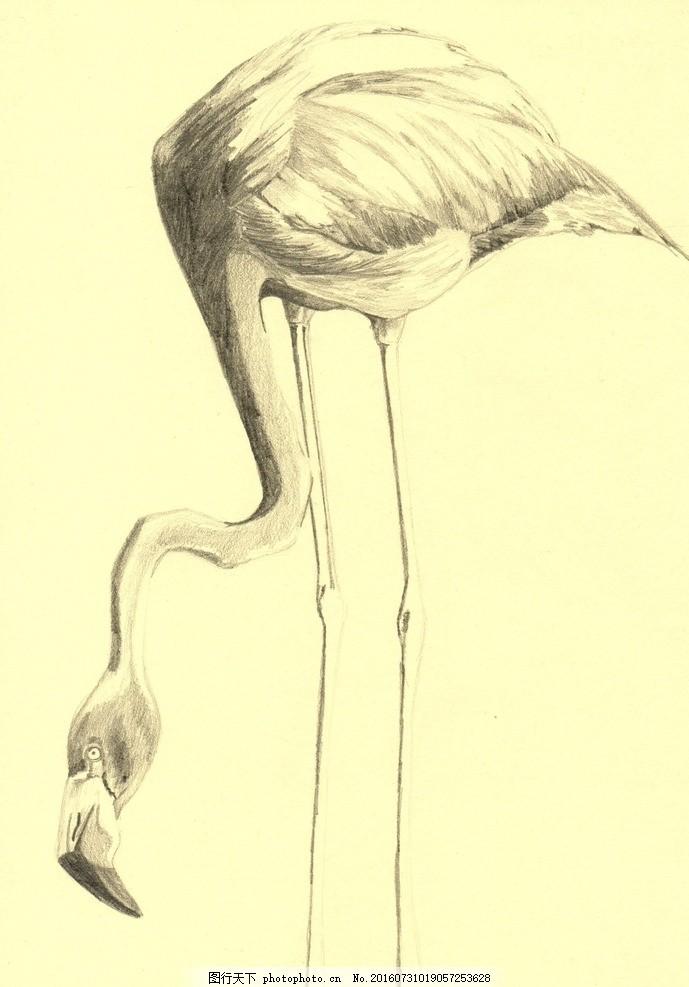 素描 火焰鸟
