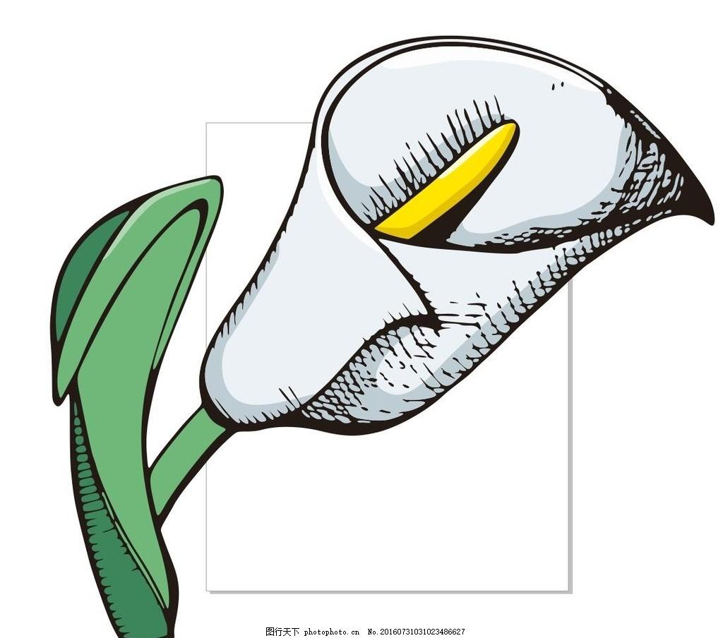 马蹄莲 线描画 素描 盆栽 植物 花卉 花朵 草木 艺术插画 插画