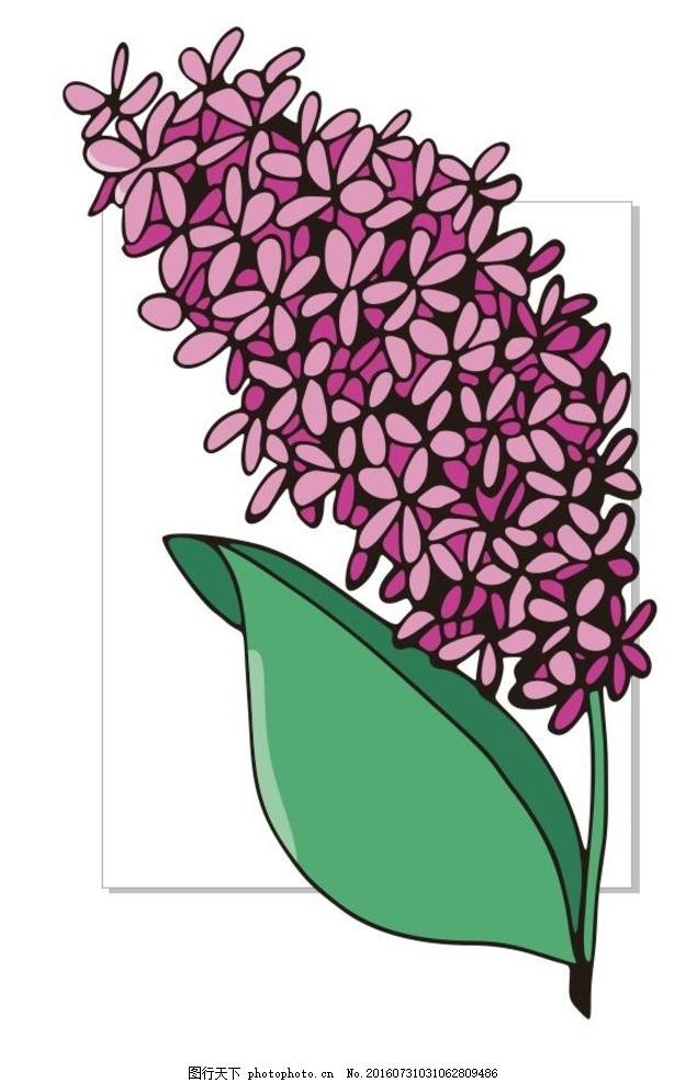 紫丁香 丁香花 紫色 线描画 素描 盆栽 植物 花卉 花朵 草木