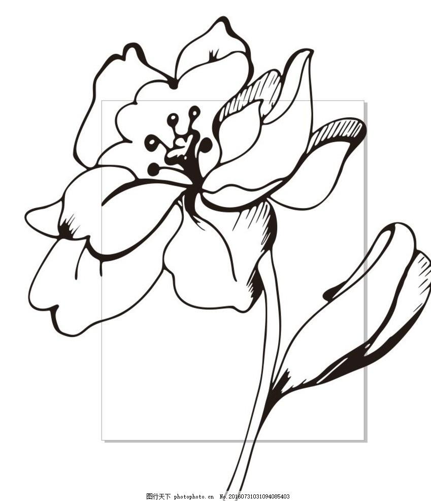 野牡丹 花 线描画 素描 盆栽 植物 花卉 花朵 草木 艺术插画 插画