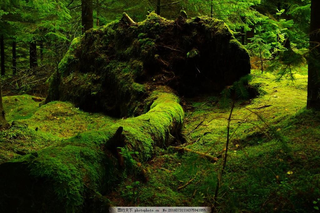 设计图库 高清素材 自然风景  原始森林风景高清图片素材下载 绿色