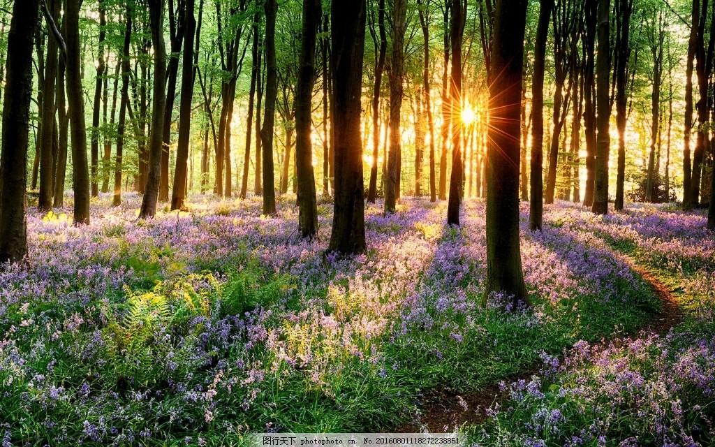 自然森林背景