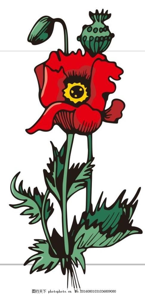虞美人 线描画 素描 盆栽 植物 花卉 花朵 草木 艺术插画 插画