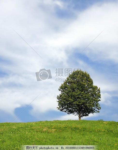 风景画 树 景观 夏季 风景 蓝天 白云 草地 背景图 桌面 大树 夏天 初