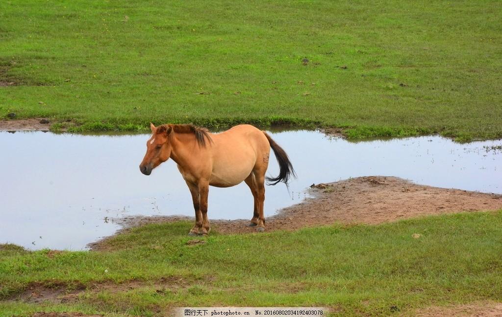 草原风光 马儿 河流 绿草 天空 草地 风光图 风景图 摄影