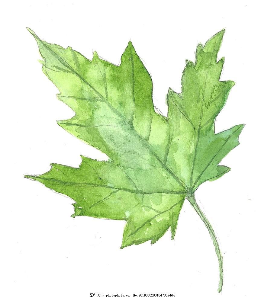 手绘树叶 叶子 条纹 叶纹 树叶纹理 时尚 装饰 背景 矢