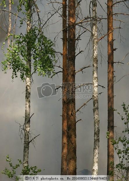森林火灾 保护 大自然 瑞典 热烟 红色
