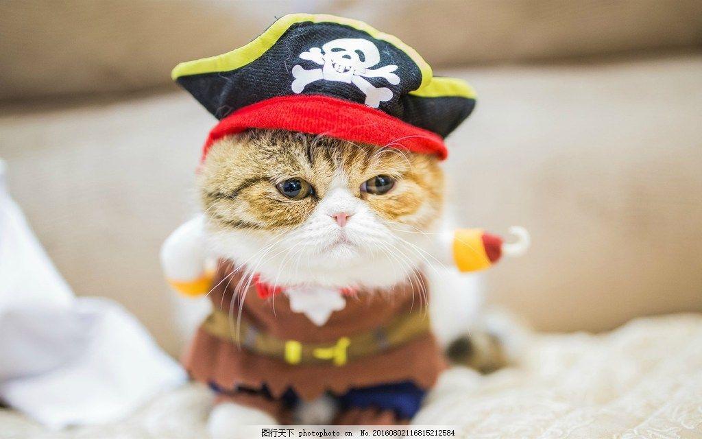 可爱戴帽子小猫图片