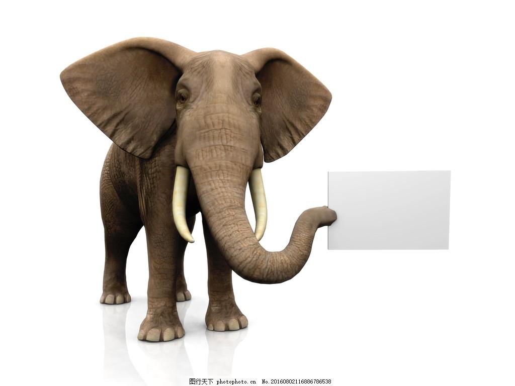 大象拿着空白纸板 空白牌子 野生动物 动物写真 高清图片 图片下载