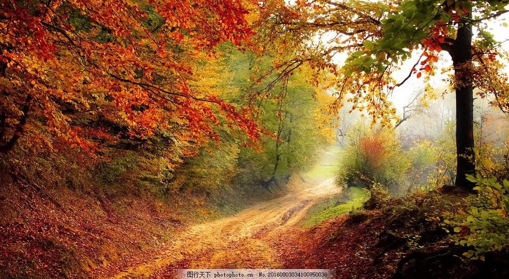 落叶 黄叶 秋天树木 树木 树林 山路 小道 秋天美景 自然风光 风景图