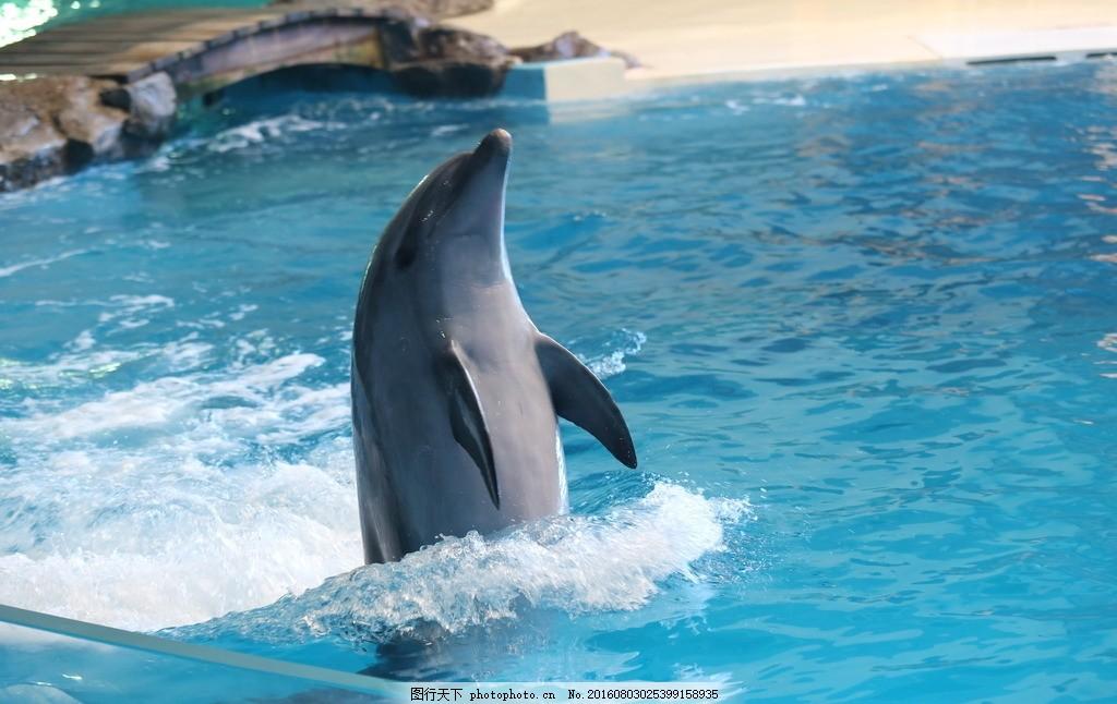 海豚 表演 海底世界 海豚表演 可爱的海豚 动物 摄影 生物世界 海洋