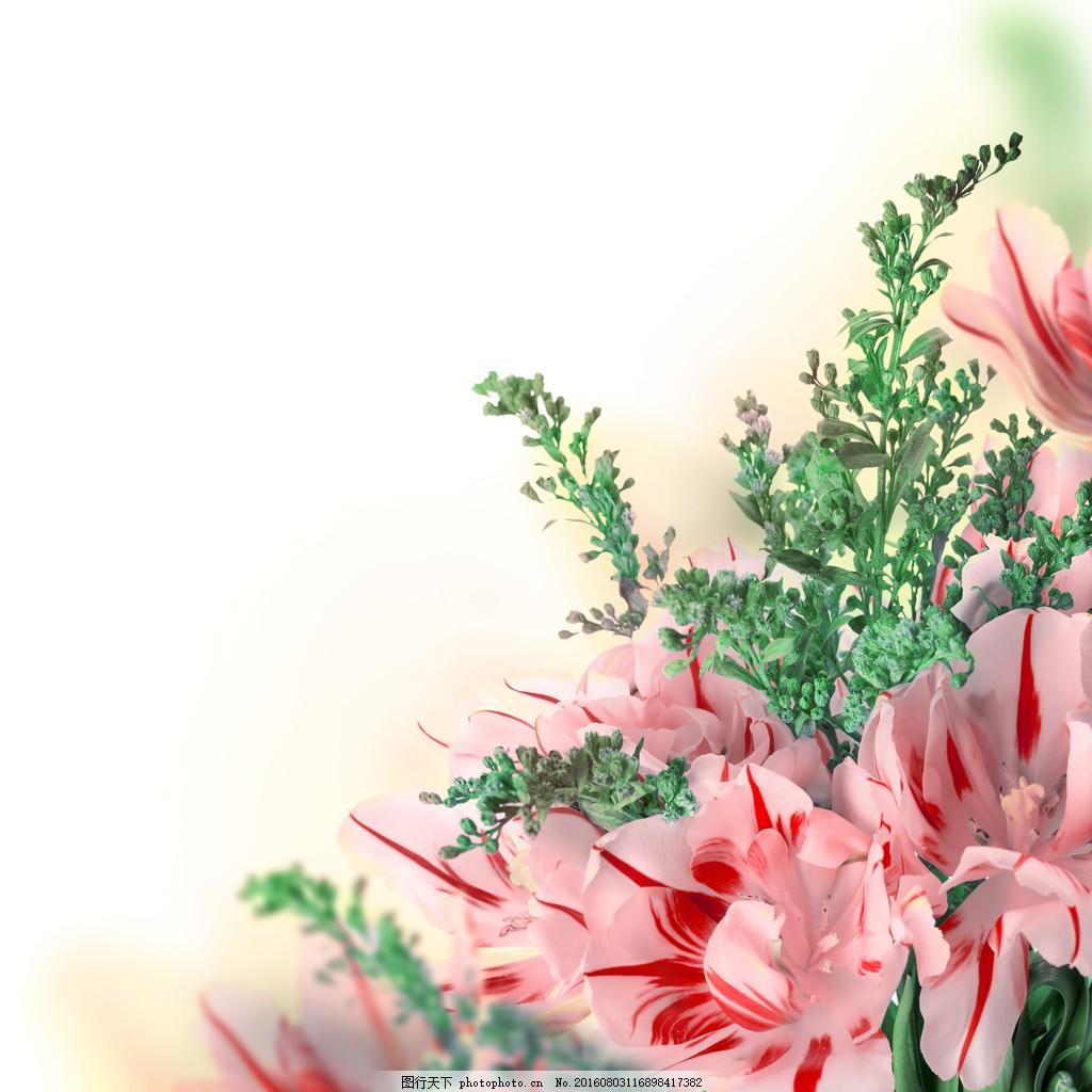 康乃馨鲜花图片