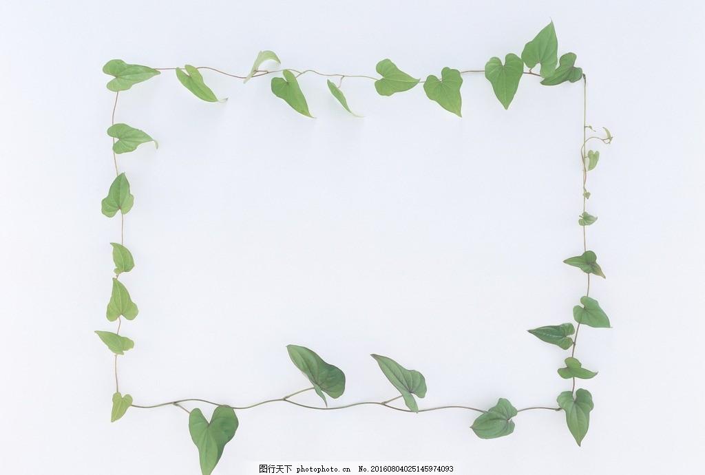 韩国手绘大树藤蔓风景