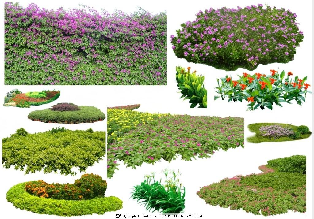 地被植物素材 地被植物 灌木植物 开花地被 攀缘植物