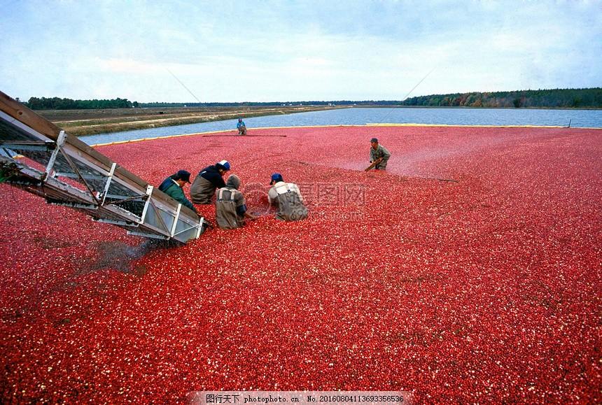 天空下的劳作的人 食物 劳作 人物 背影 远景     红色 jpg