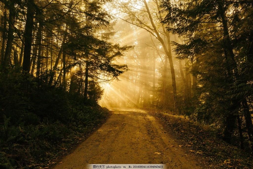 夕阳下的林荫道 树林 道路 小路 路径 小道 马路 树木 土路