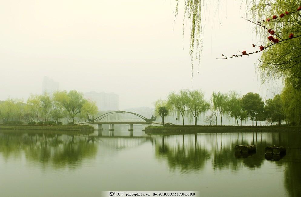 湖边树影图片,树木倒影 常德滨湖公园 湖边烟雨 公园