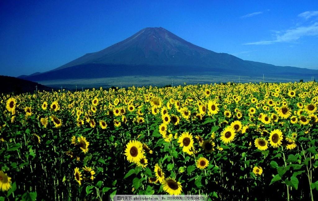 美丽的富士山下风景图片