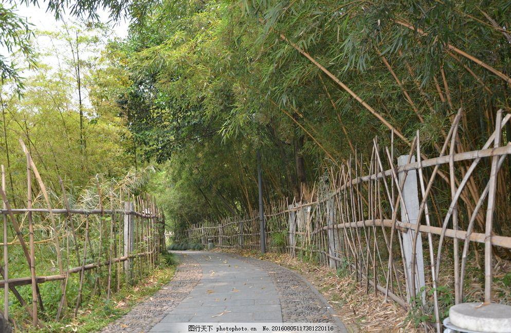 竹林 小径 篱笆 亭子 宁波 城市风貌 月湖公园 湖水 中国园林 古风桥