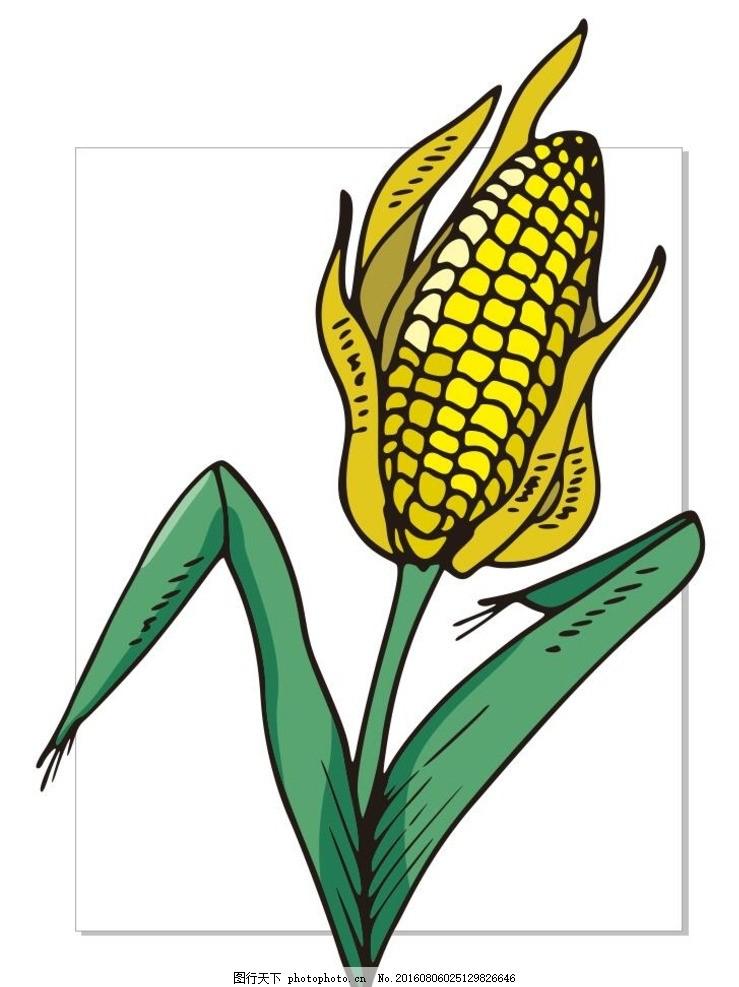 玉米幼根细胞手绘图