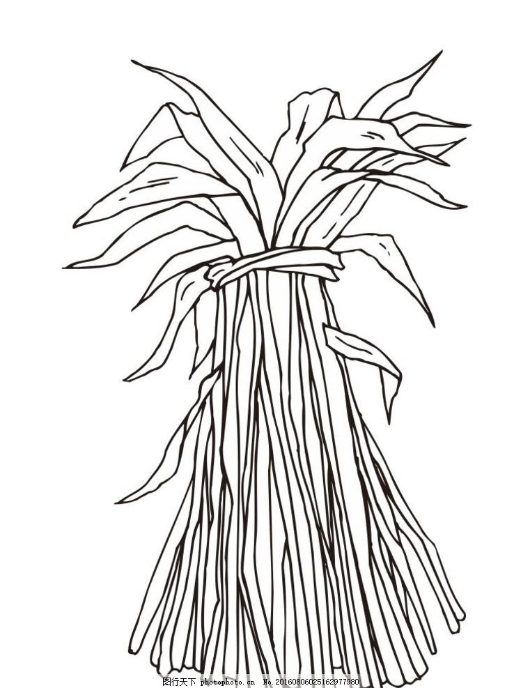 韭菜 草 简约 简单 时尚 花 简约画 植物 花卉 花朵 草木
