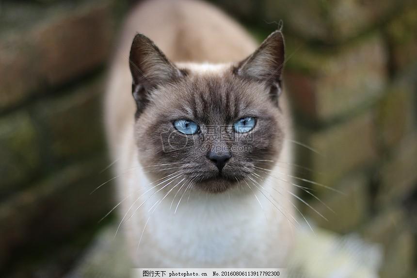发呆中的小猫 动物 猫脸 国内动物 猫头 眼睛 胡须 红色