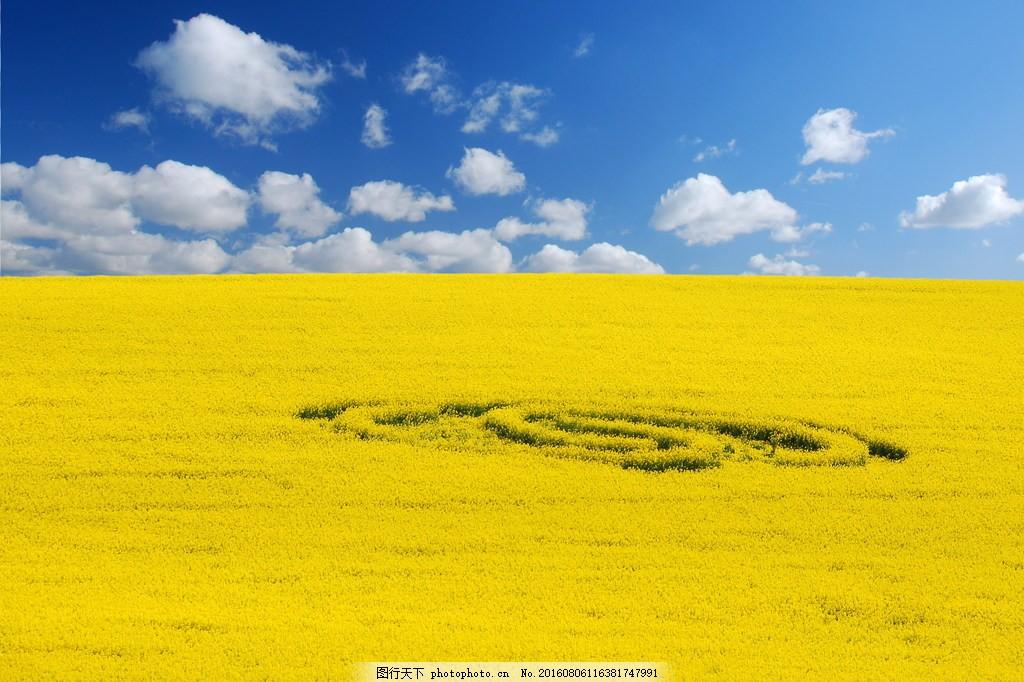 高清黄色麦田风景图片