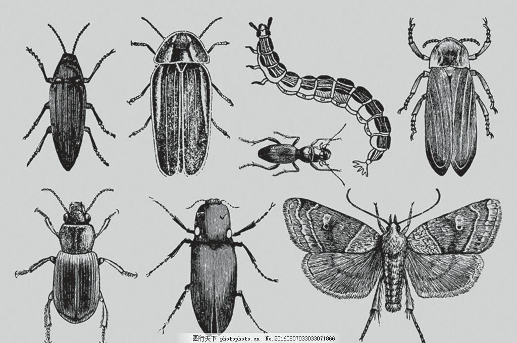 手绘虫子 卡通昆虫 可爱 昆虫素材 虫子素材 昆虫卡通动物 卡通昆虫