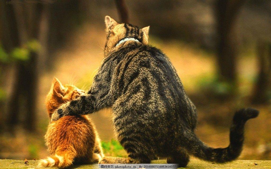 可爱大猫与小猫图片