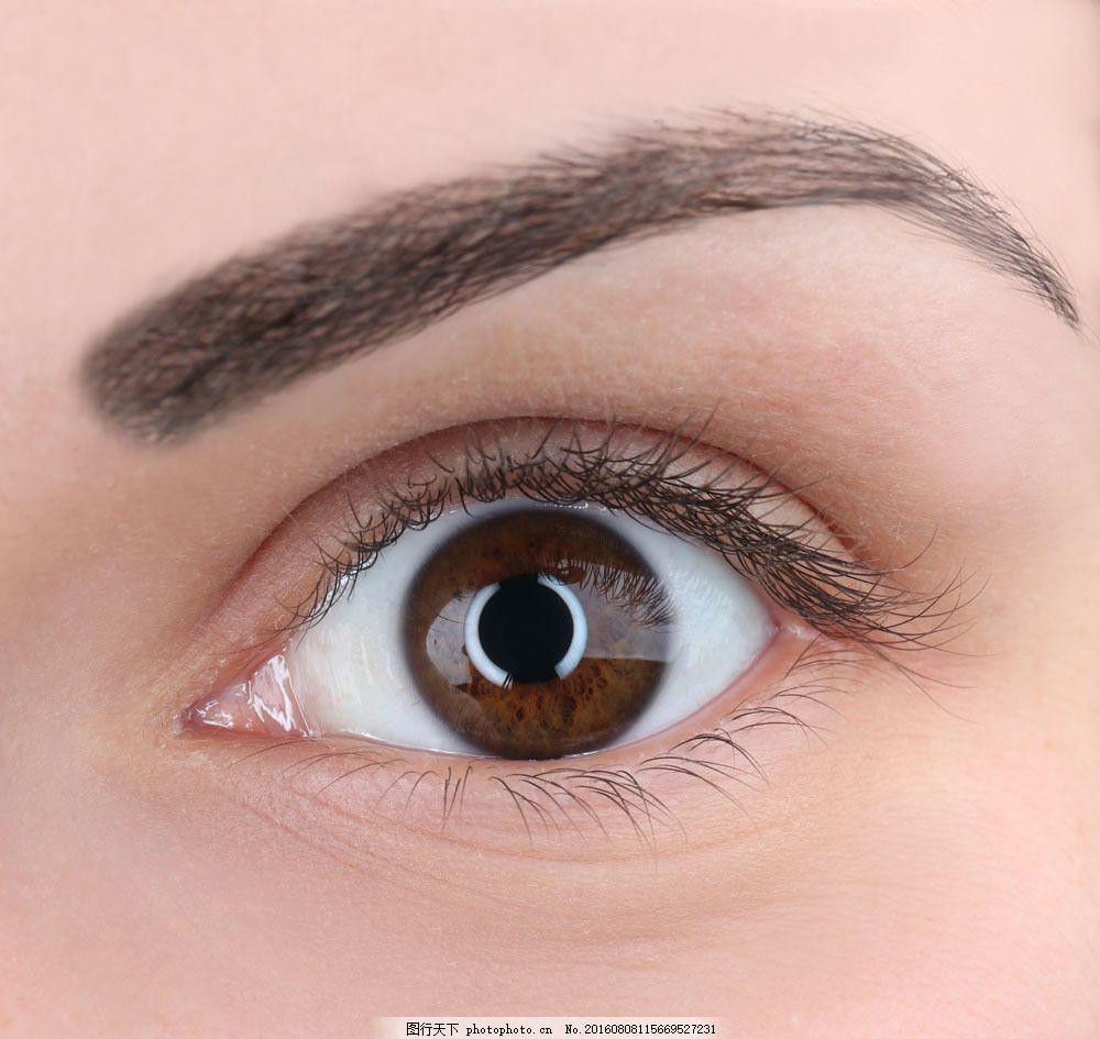近视眼 眉毛 眼睛 瞳孔 睫毛 美女眼睛 人体器官 人体器官图 人物图片