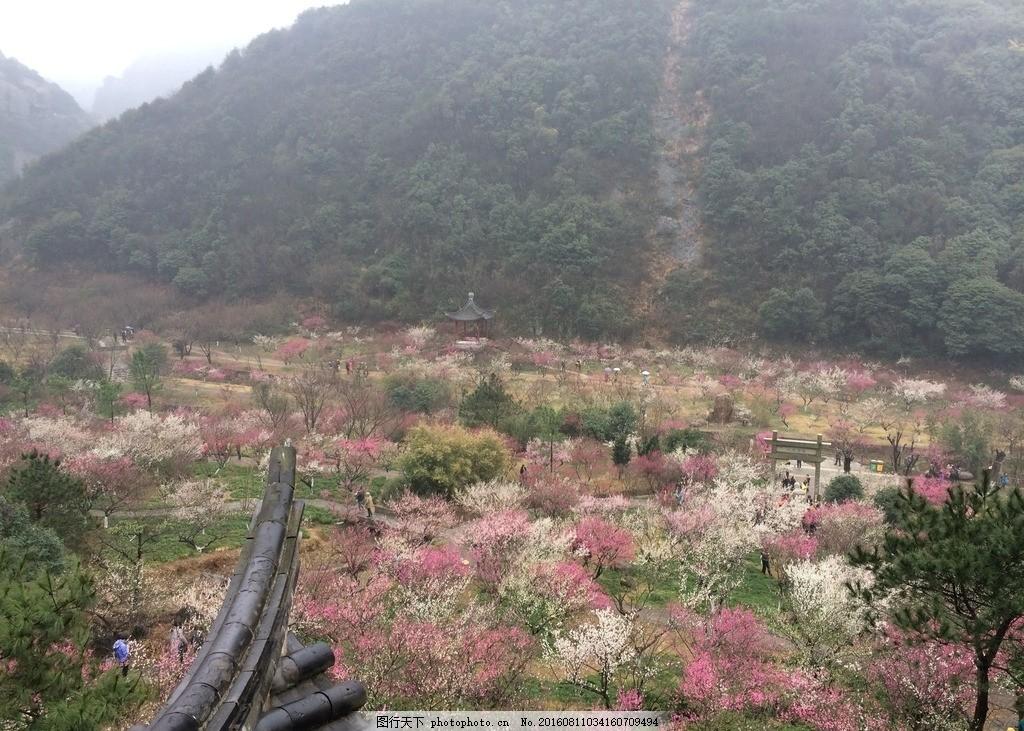 梅花 花 花海 梅山 山 摄影 自然景观 自然风景 72dpi jpg
