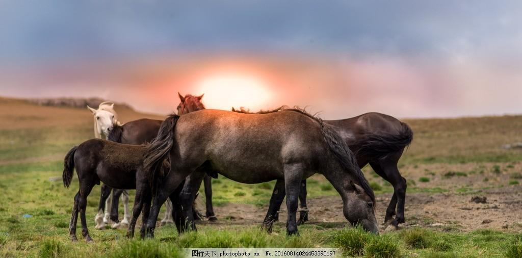 摄影马 马到成功 高清马 超清马 高清马素材 高清马壁纸 壁纸 动物 奔