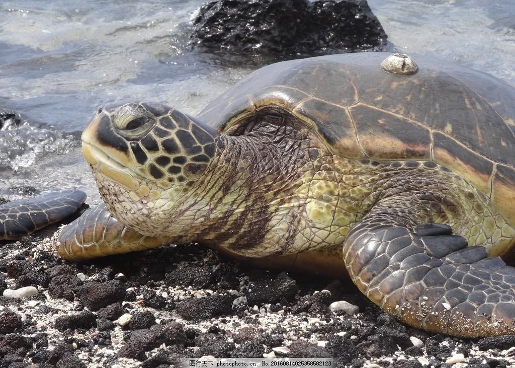 海龟 海底世界 海底生物 鱼 海底世界图片 珊瑚 鱼群 海洋 乌龟
