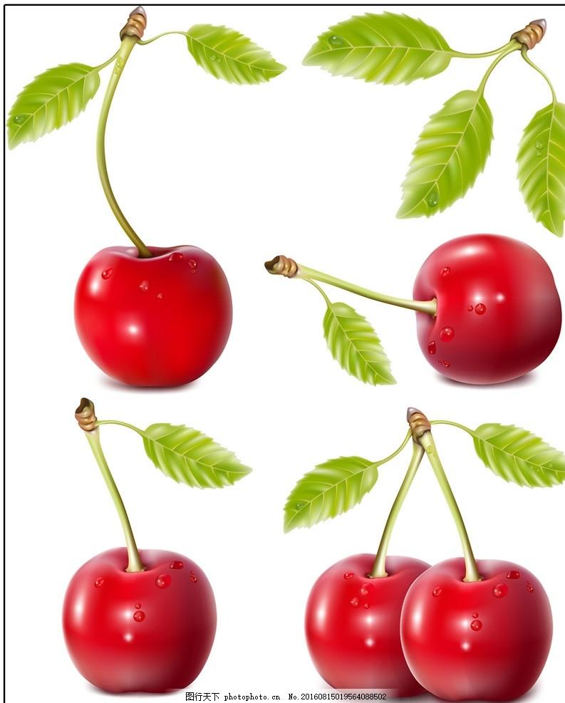手绘红色樱桃水果矢量图 植物花卉果实 水果效果图 设计元素