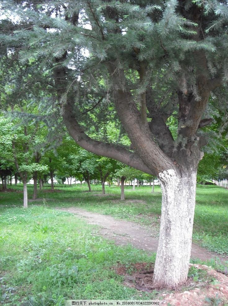 森林 树林 大树 绿色森林 丛林 摄影 自然景观 自然风景 72dpi jpg