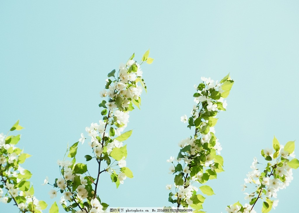 夏日 小清新 背景 日系 树木 花朵 摄影 生物世界 树木树叶 72dpi jpg