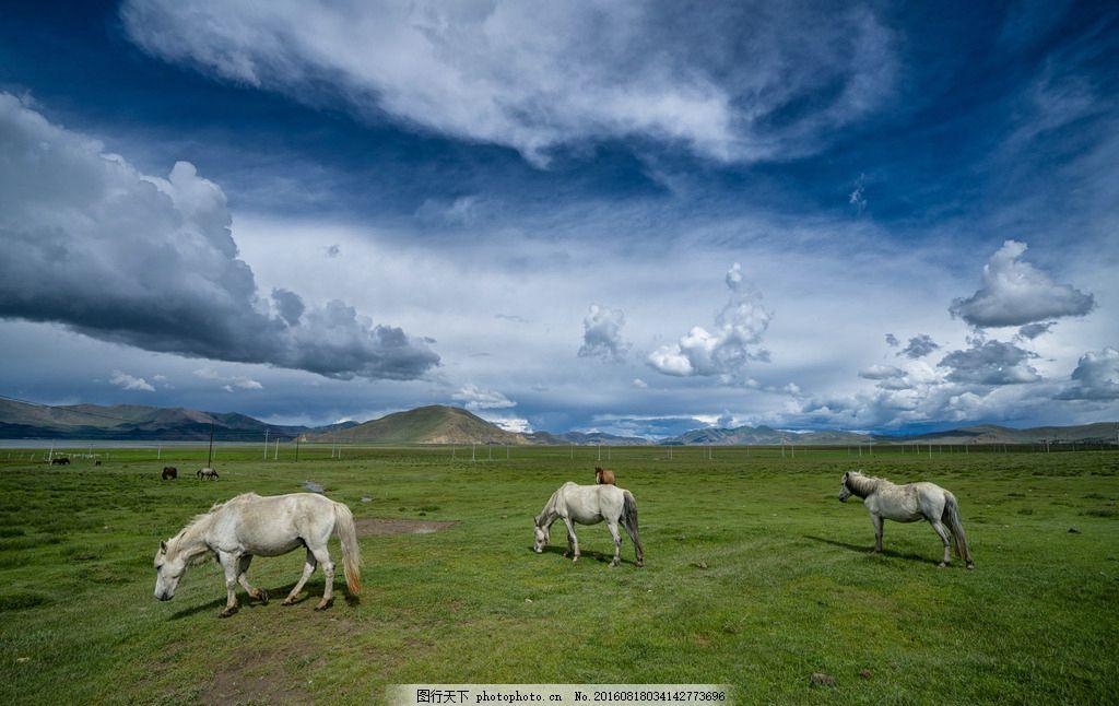 藏地观茶 西藏 天空 草地 美景 风光 宁静 摄影 旅游摄影 自然风景