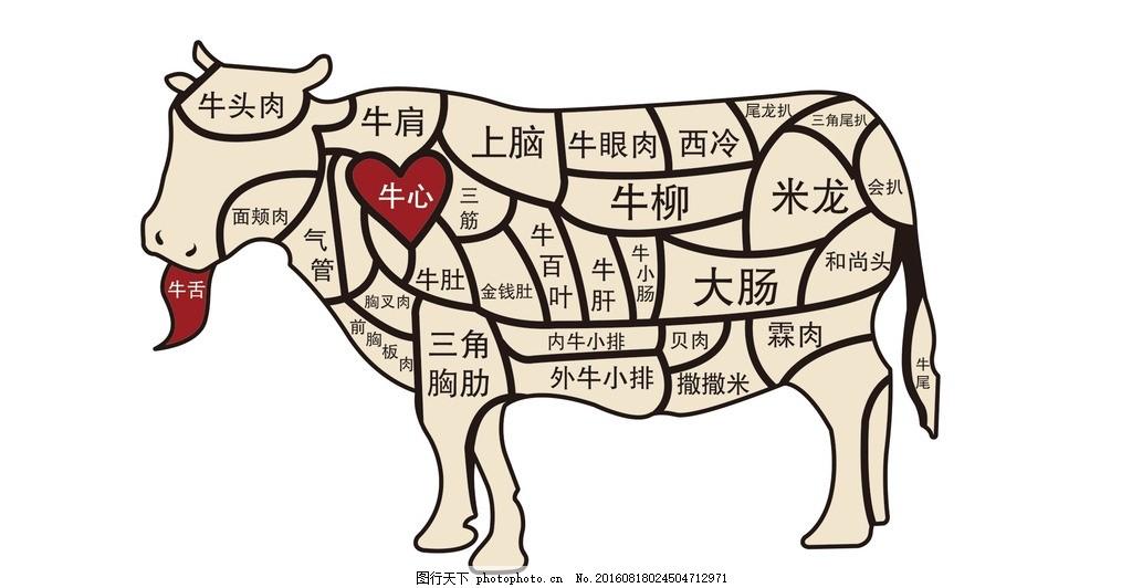 牛肉名称结构位置分布图 模块 肉牛 矢量素材 身体位置 身体结构